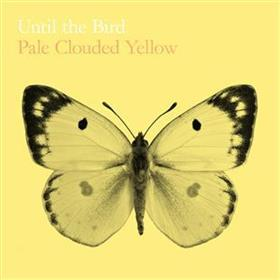 Until The Bird... - Pale Clouded Yellow